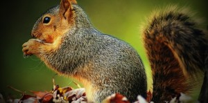 memic.net-playfull-squirrel